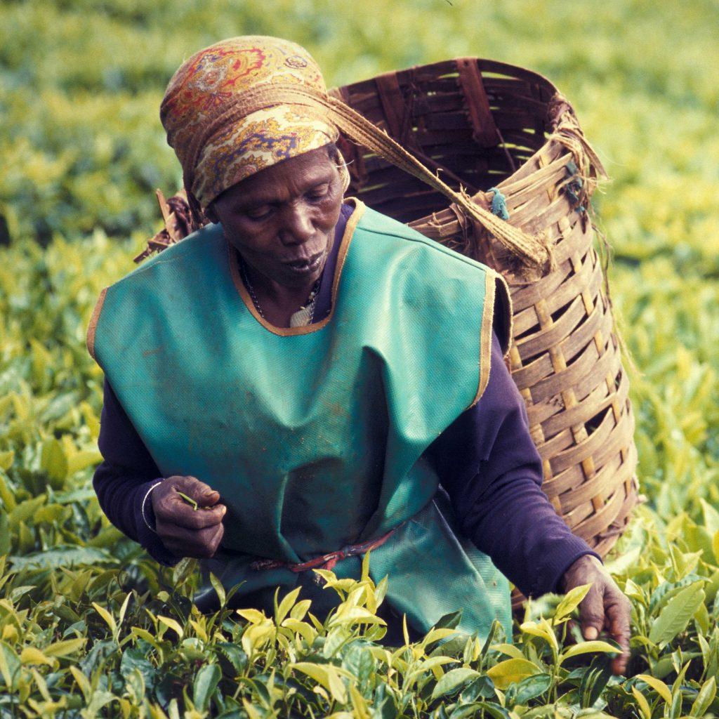 indigenous crops