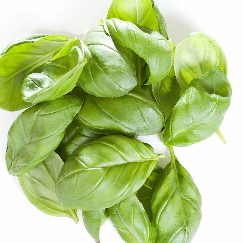 Fresh Organic Basil Herb