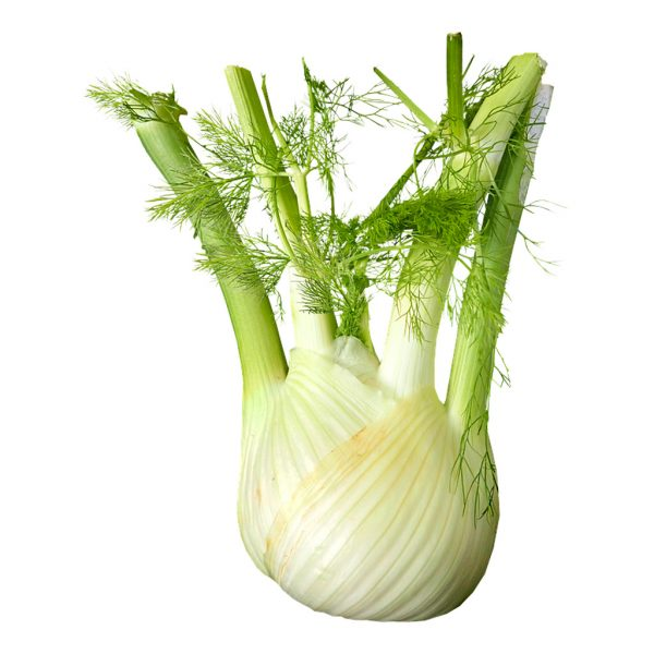 Fresh Organic Fennel Herb