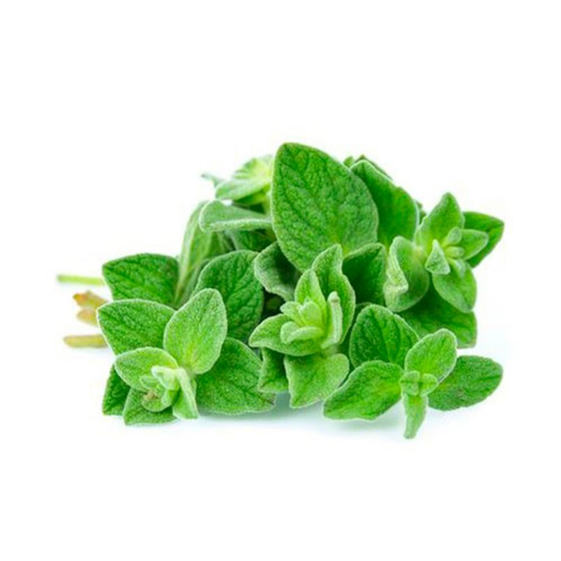 Fresh Organic Oregano Herb