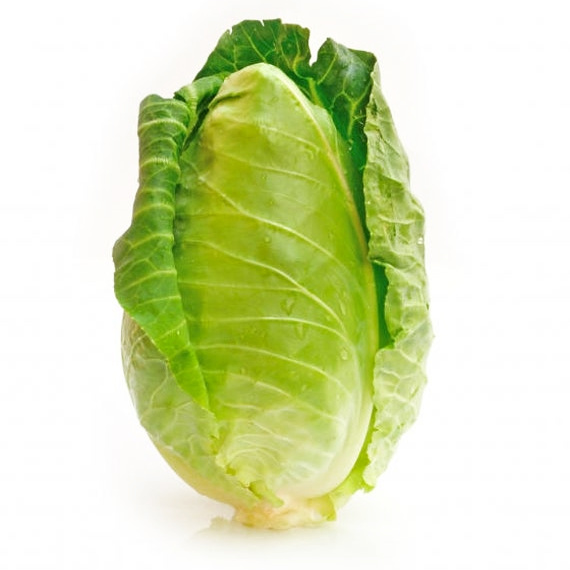 Fresh organic cone cabbage