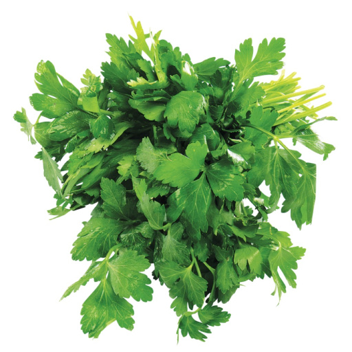 Fresh organic Italian parsley